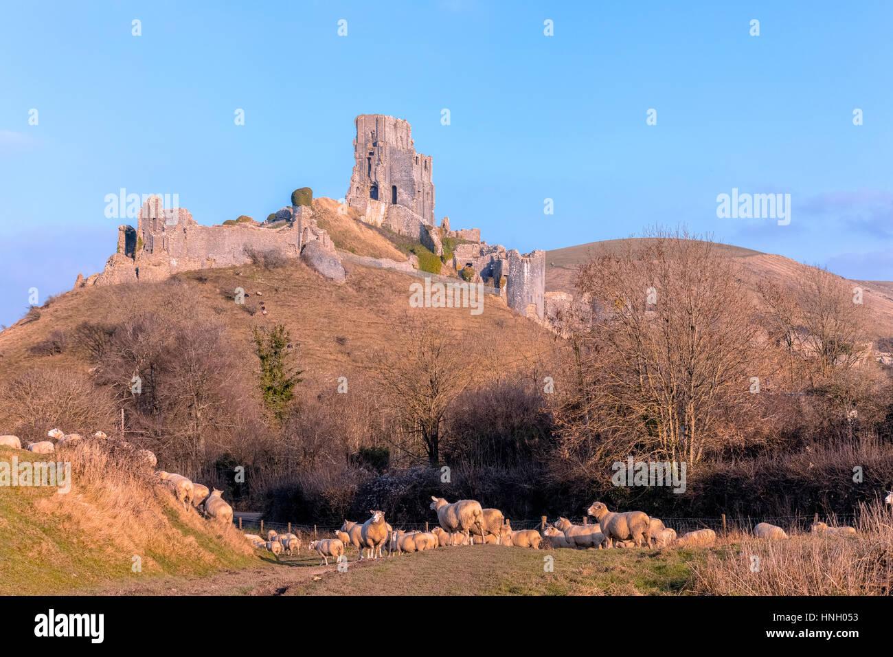 Corfe Castle, Dorset, England, Regno Unito Immagini Stock
