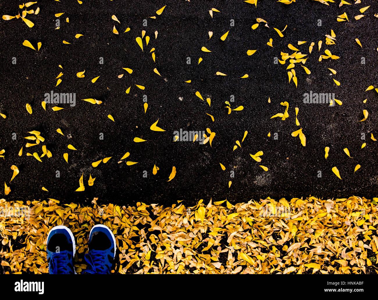 Selfie di piedi con scarpe da corsa su asfalto pavimento coperto di foglia  in city park 9a153e90ab1