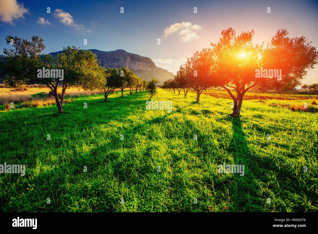 Ombra di albero con il tramonto del sole. Sicilia. L'Italia. Europa Immagini Stock