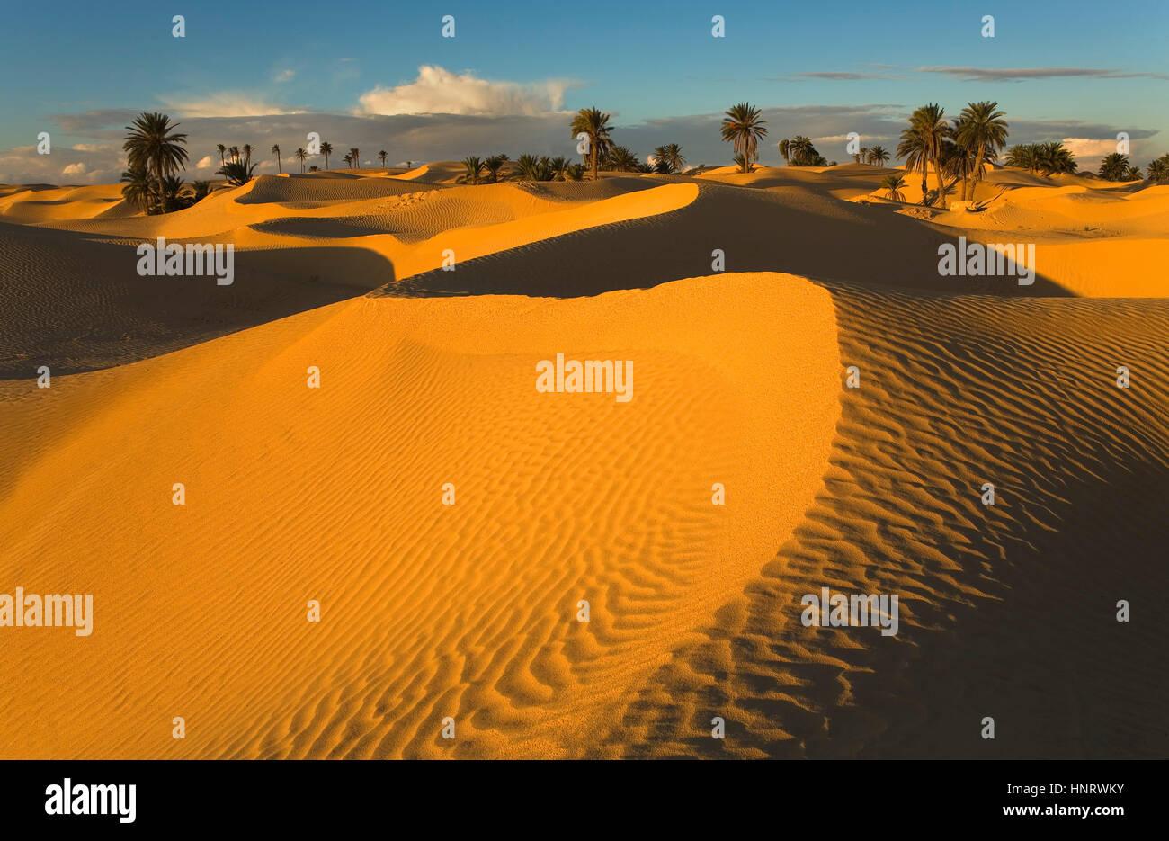 Tunisia.zaafrane (Douz).deserto Immagini Stock