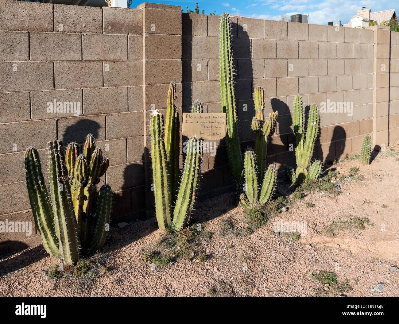 Cactus con segno chiedendo per cortesia Immagini Stock