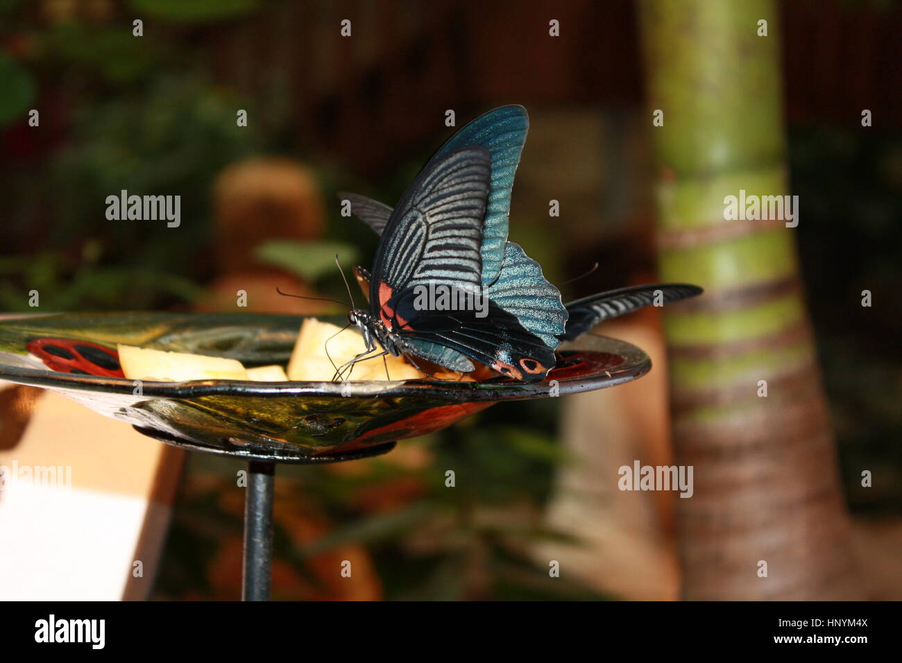 Stupenda farfalla Immagini Stock