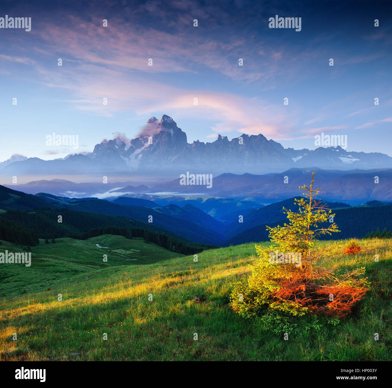 Fiori di campo in montagna al tramonto. Nei Carpazi. Ucraina, UE Immagini Stock