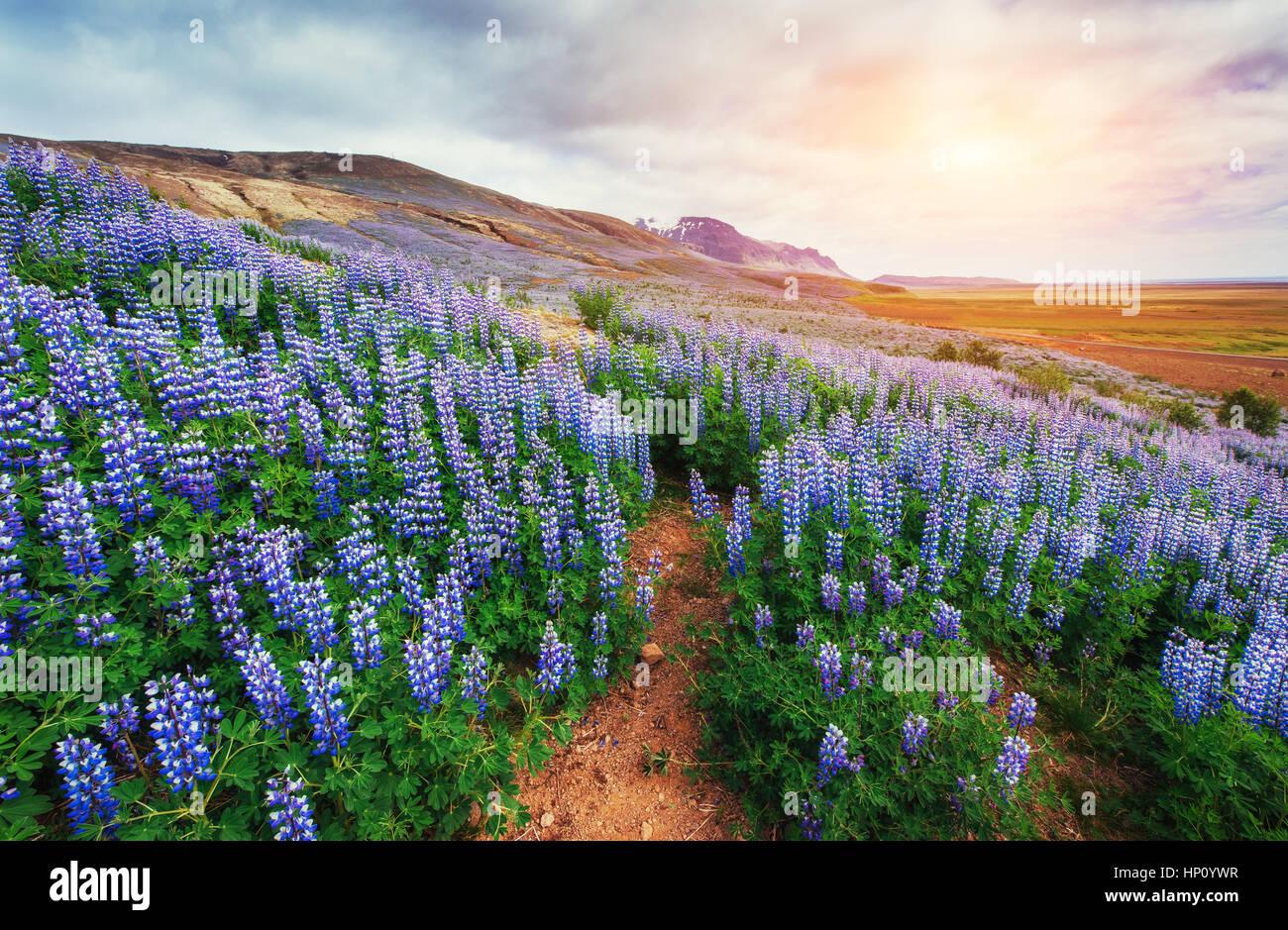 I pittoreschi paesaggi di foreste e montagne Immagini Stock