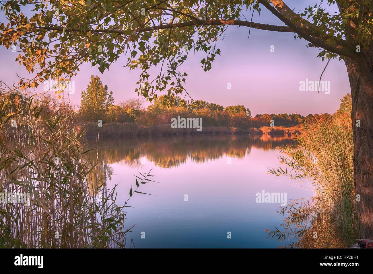 In autunno la foresta e il lago Immagini Stock