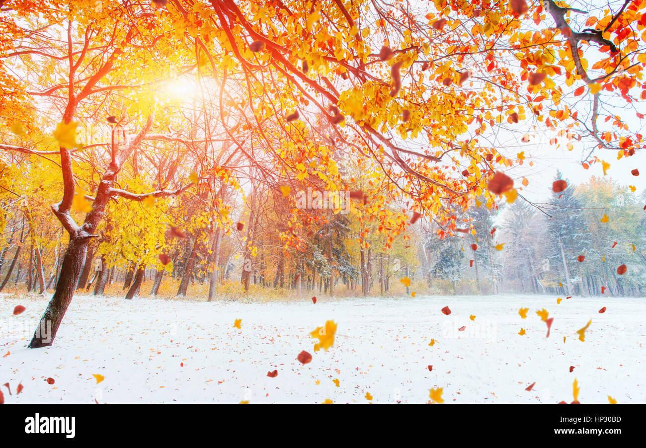 Ottobre mountain foresta di faggio con la prima neve invernale. Immagini Stock