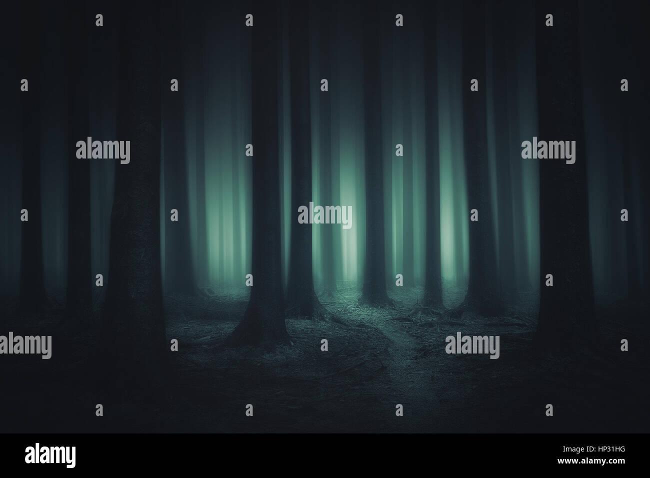 Scuro e spaventoso forest Immagini Stock