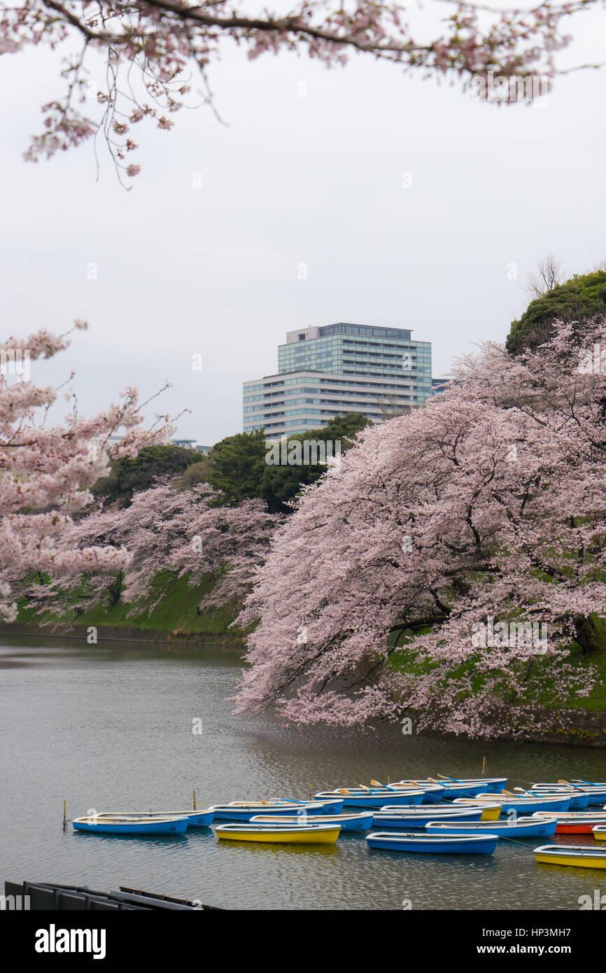Barche a remi nel Palazzo Imperiale fossato a Tokyo in Giappone Immagini Stock