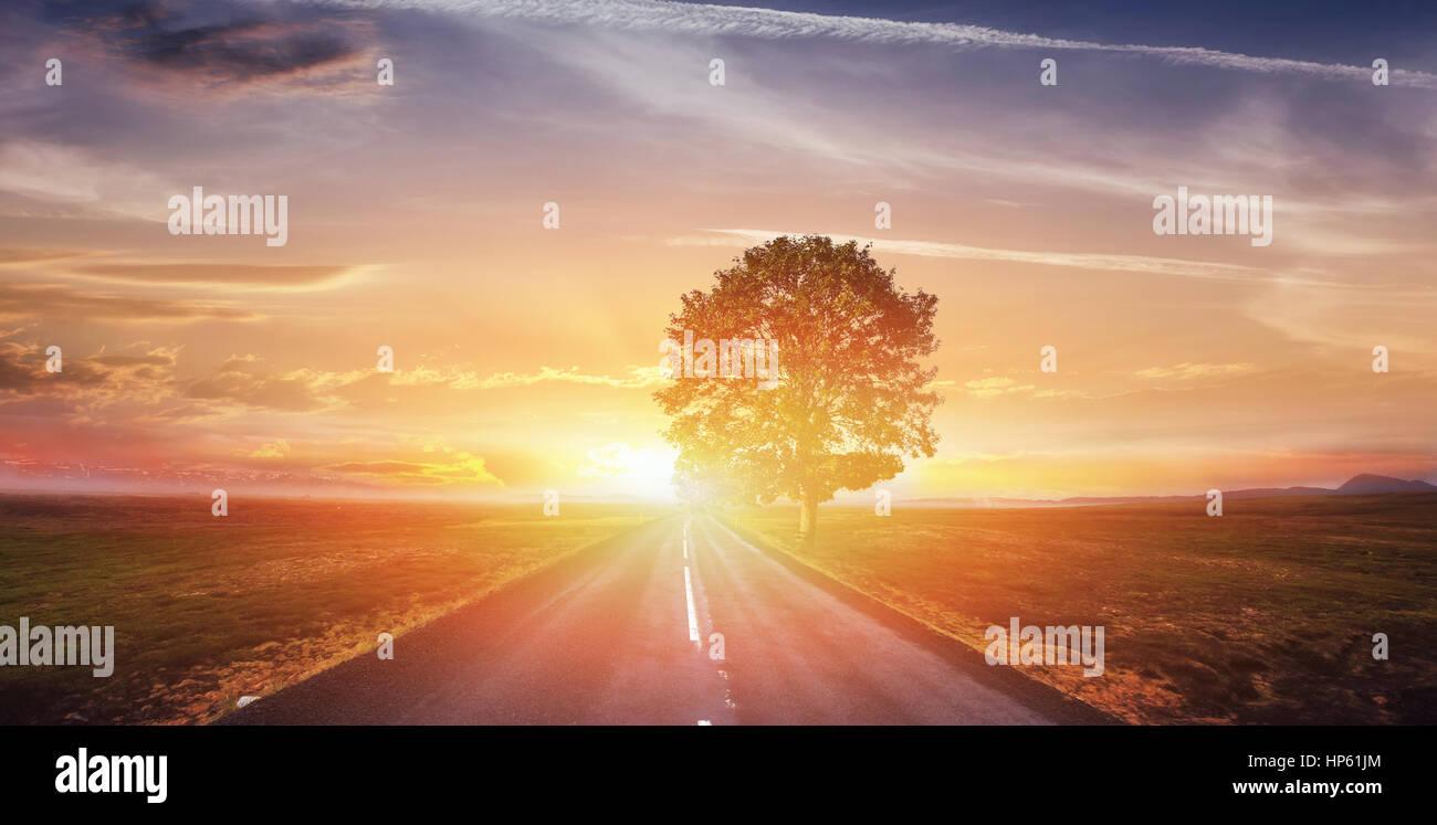 Fantastico paesaggio strada asfaltata e albero solitario al tramonto. Un essere Foto Stock