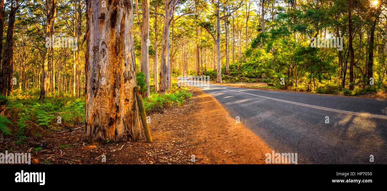 Boranup panorama boschivo, Australia occidentale Immagini Stock