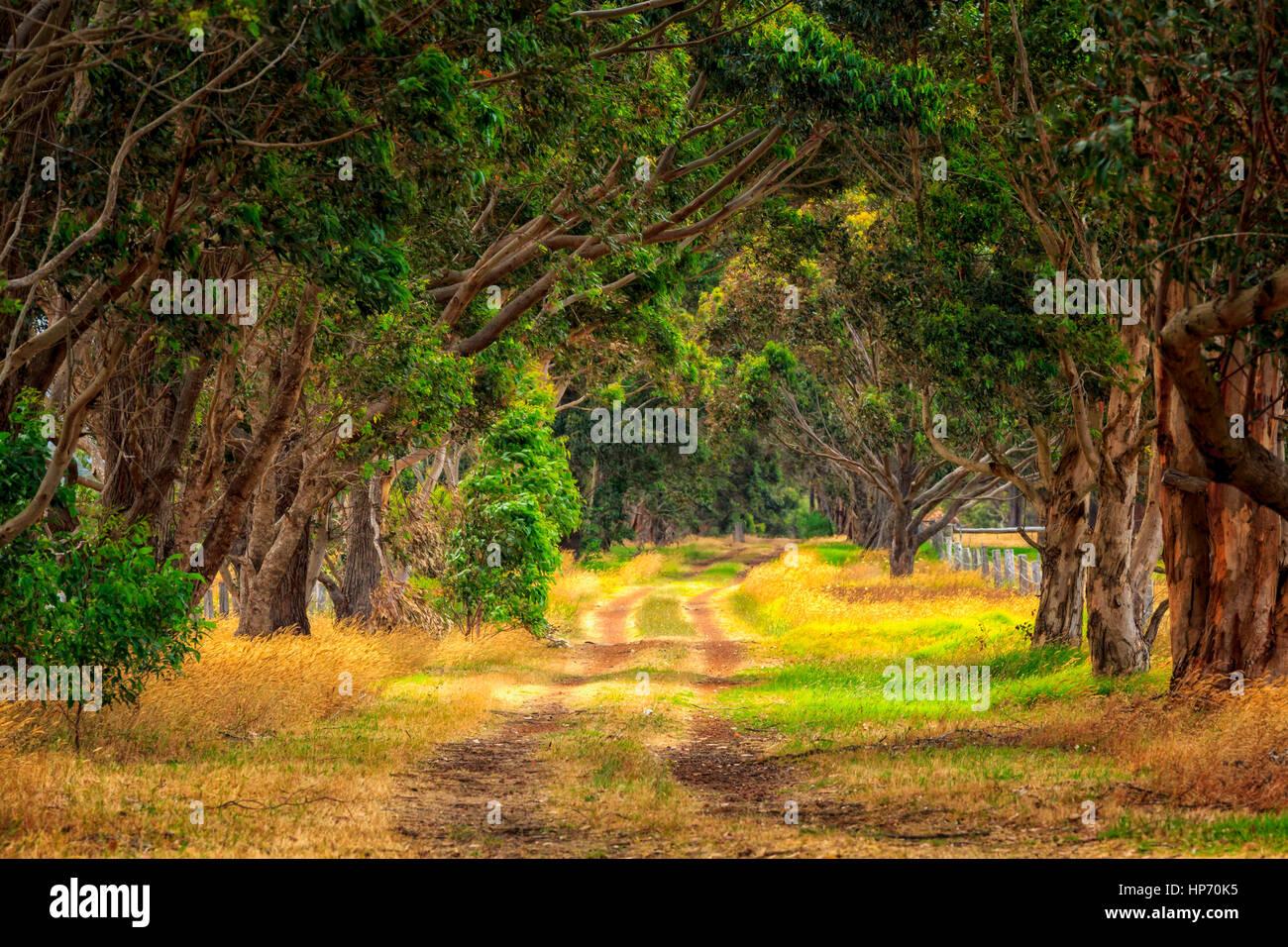 Fattoria rurale Road nel sud-ovest del Western Australia Immagini Stock
