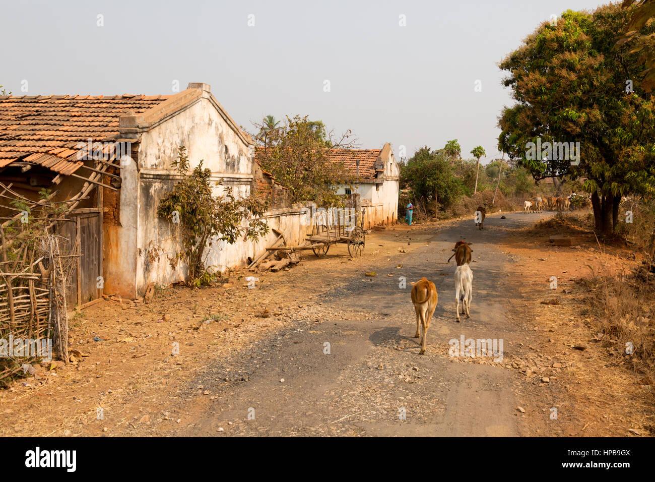 India village street scene, nello Stato del Maharashtra, India, Asia Immagini Stock