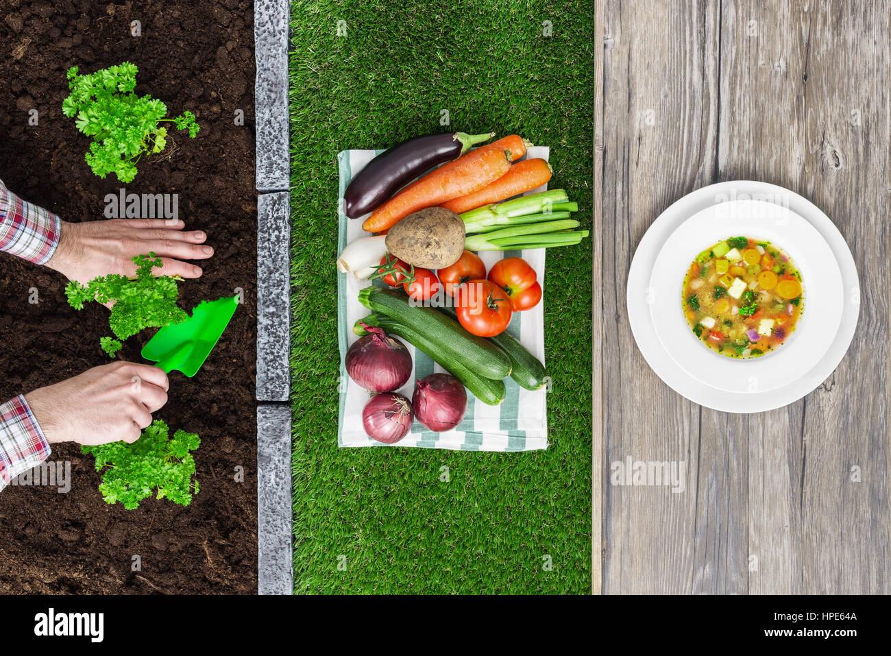 Il cibo dalla fattoria alla tavola: agricoltore di piantare le piantine in giardino, ortaggi raccolti e gustosa minestra in un piatto Foto Stock