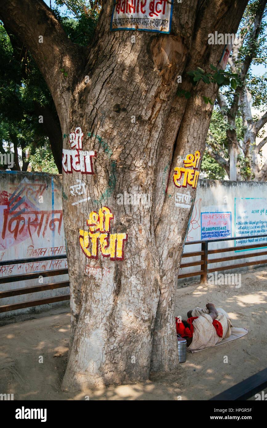 Albero con il sanscrito graffiti - Sri Radha. India. Immagini Stock