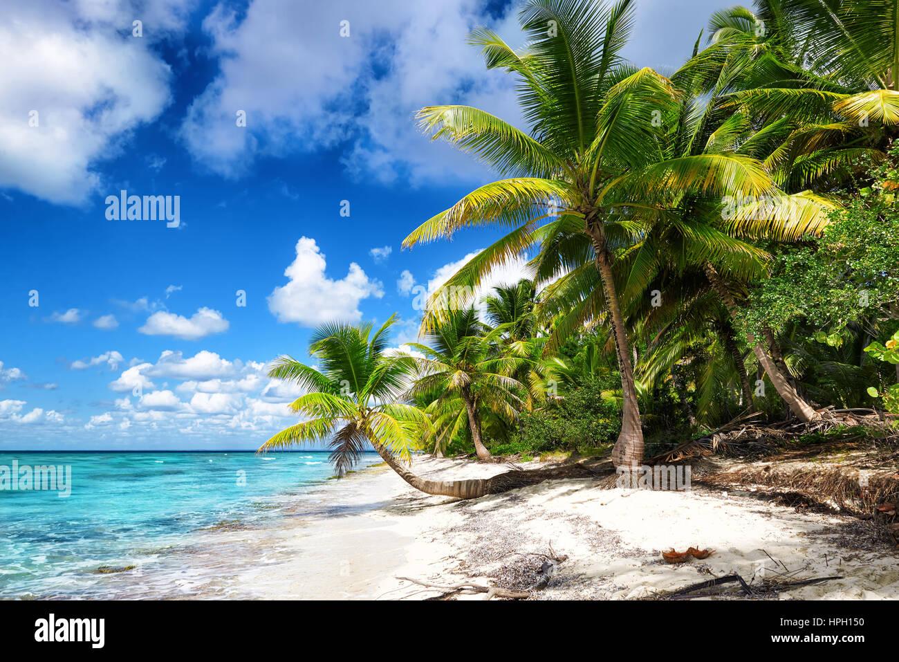 Tropical spiaggia di sabbia bianca con alberi di palma. Saona Island, Repubblica Dominicana Immagini Stock