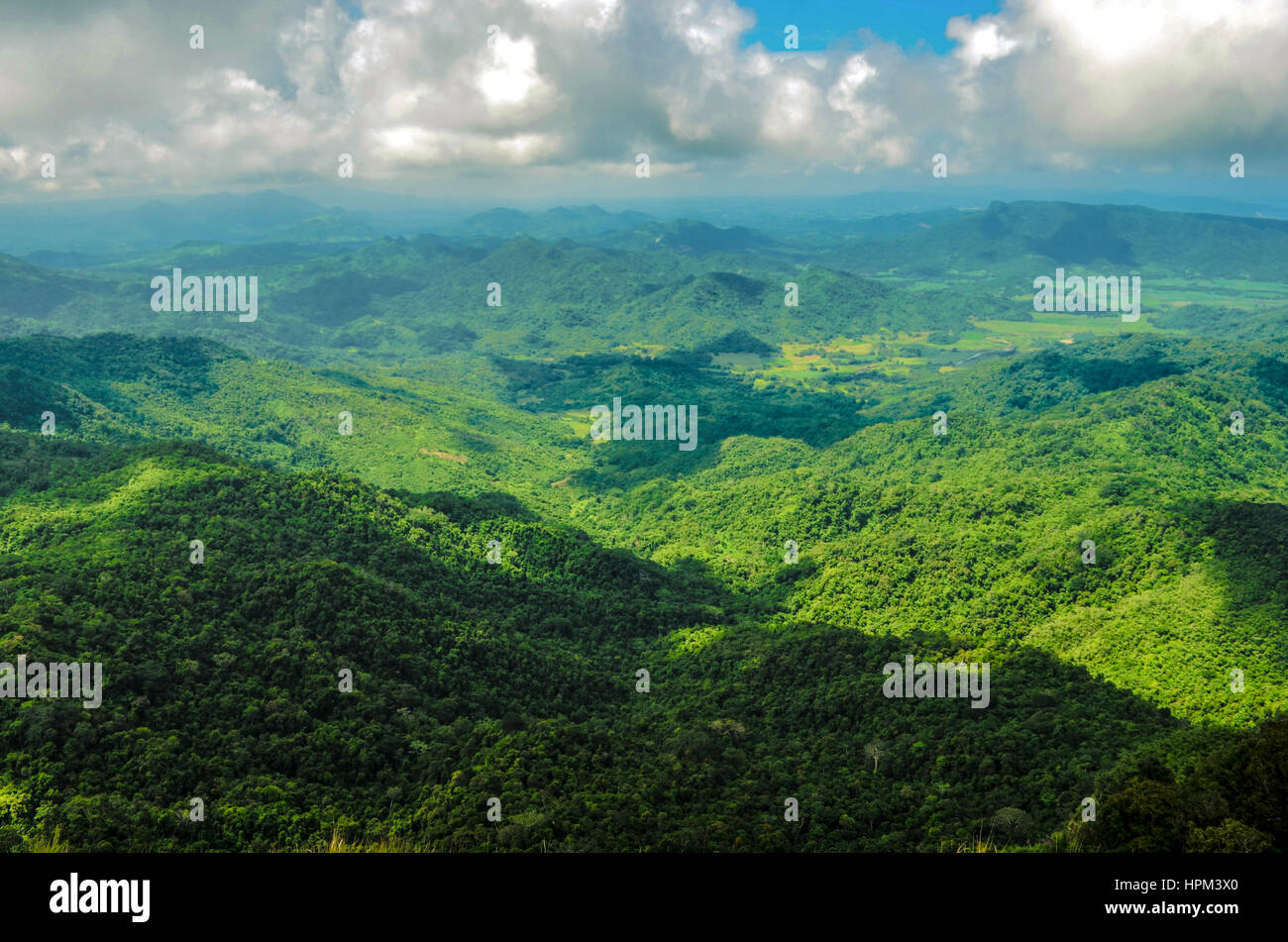 Pico de Loro Immagini Stock