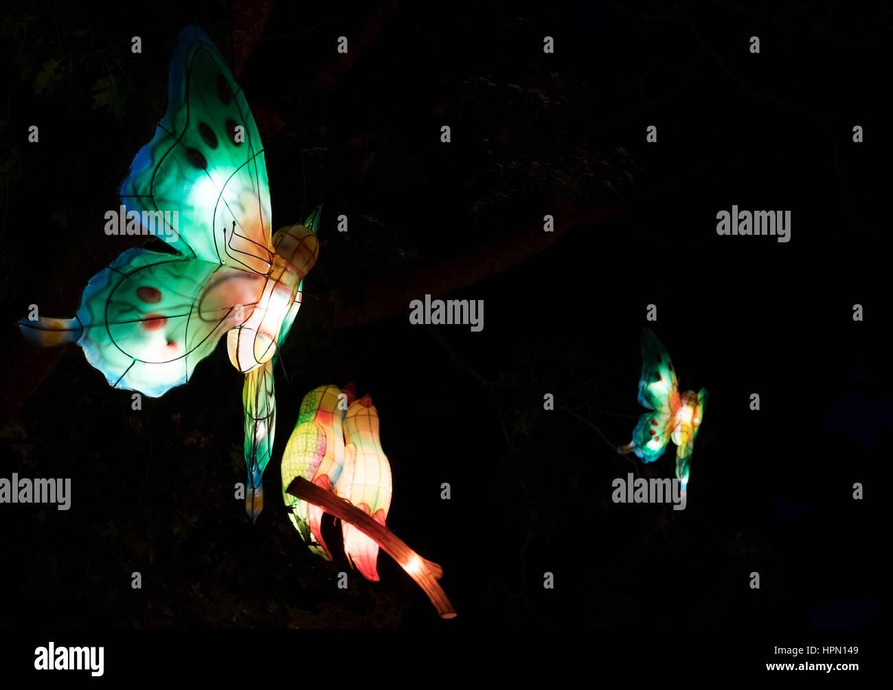 Le farfalle Immagini Stock