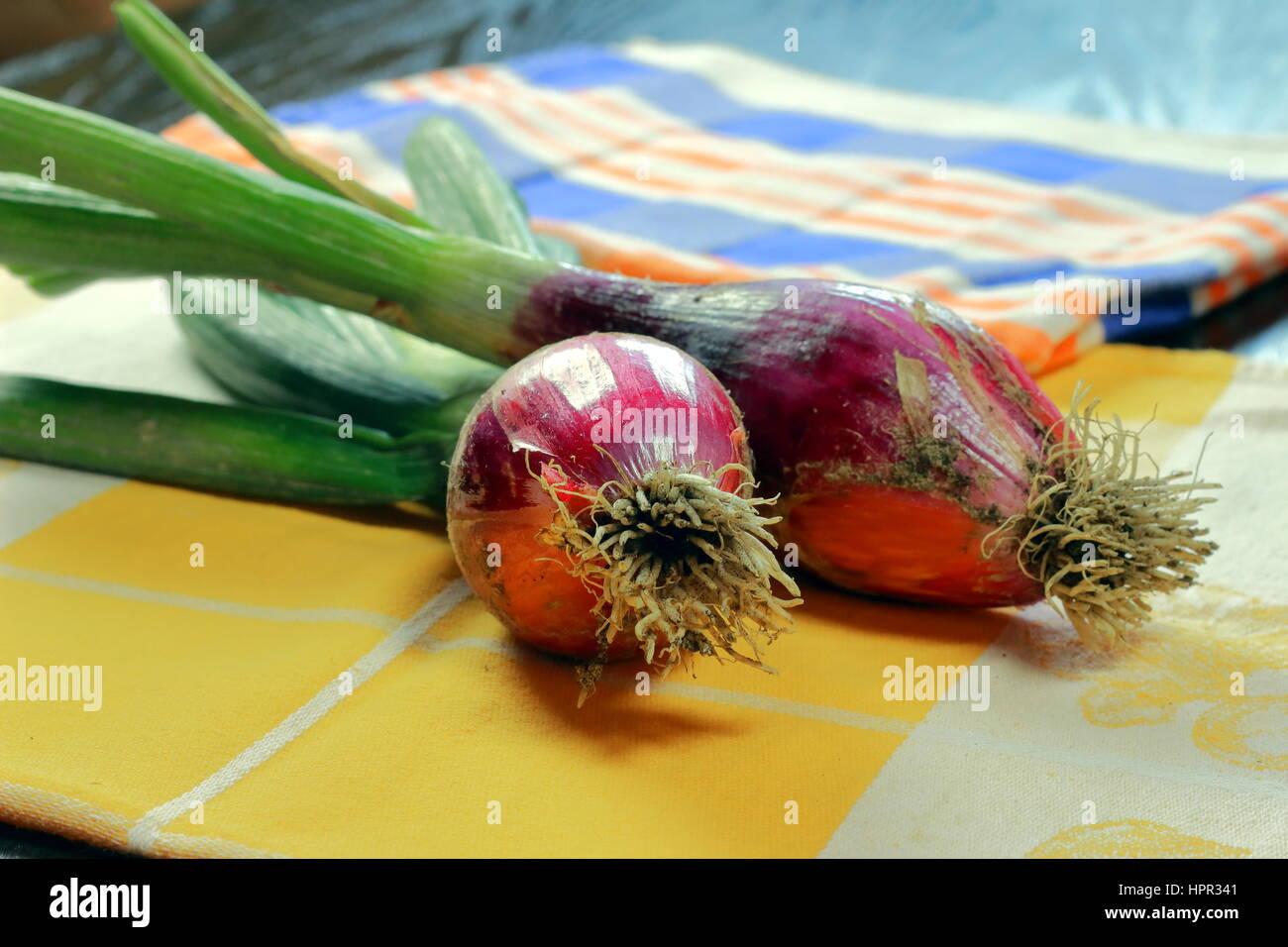 Materie organiche red Bulbo di cipolla sulla colorata biancheria per la cucina che giace sul legno scuro del tavolo Immagini Stock