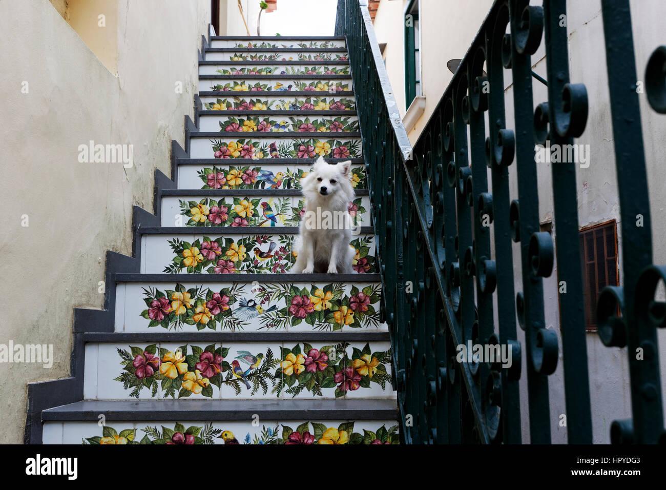 White dog sitter su scale realizzato da piastrelle di maiolica