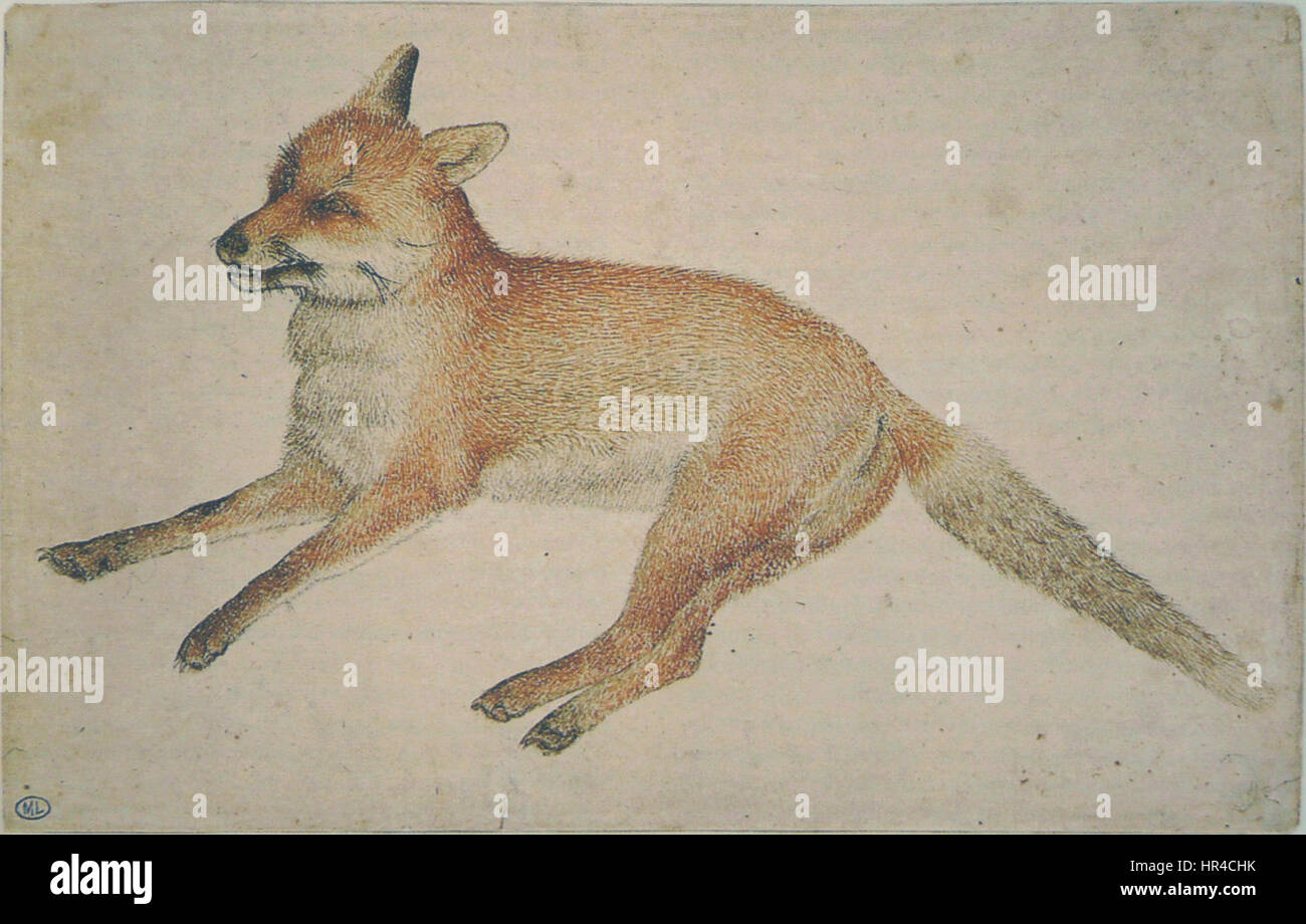 Tidal 34 Fox Chestnut