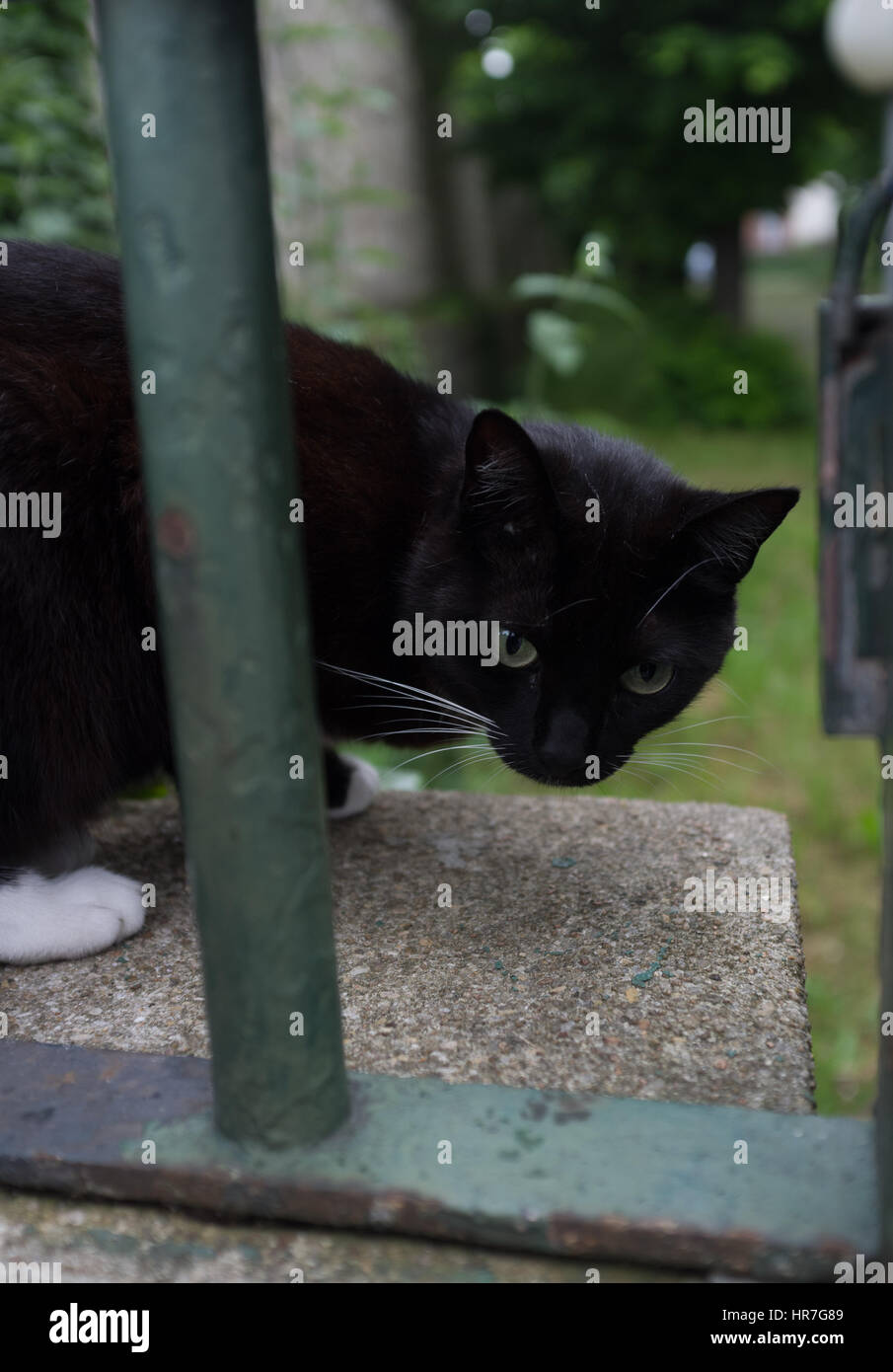 Cat On Garden Wall Immagini Cat On Garden Wall Fotos Stock Alamy