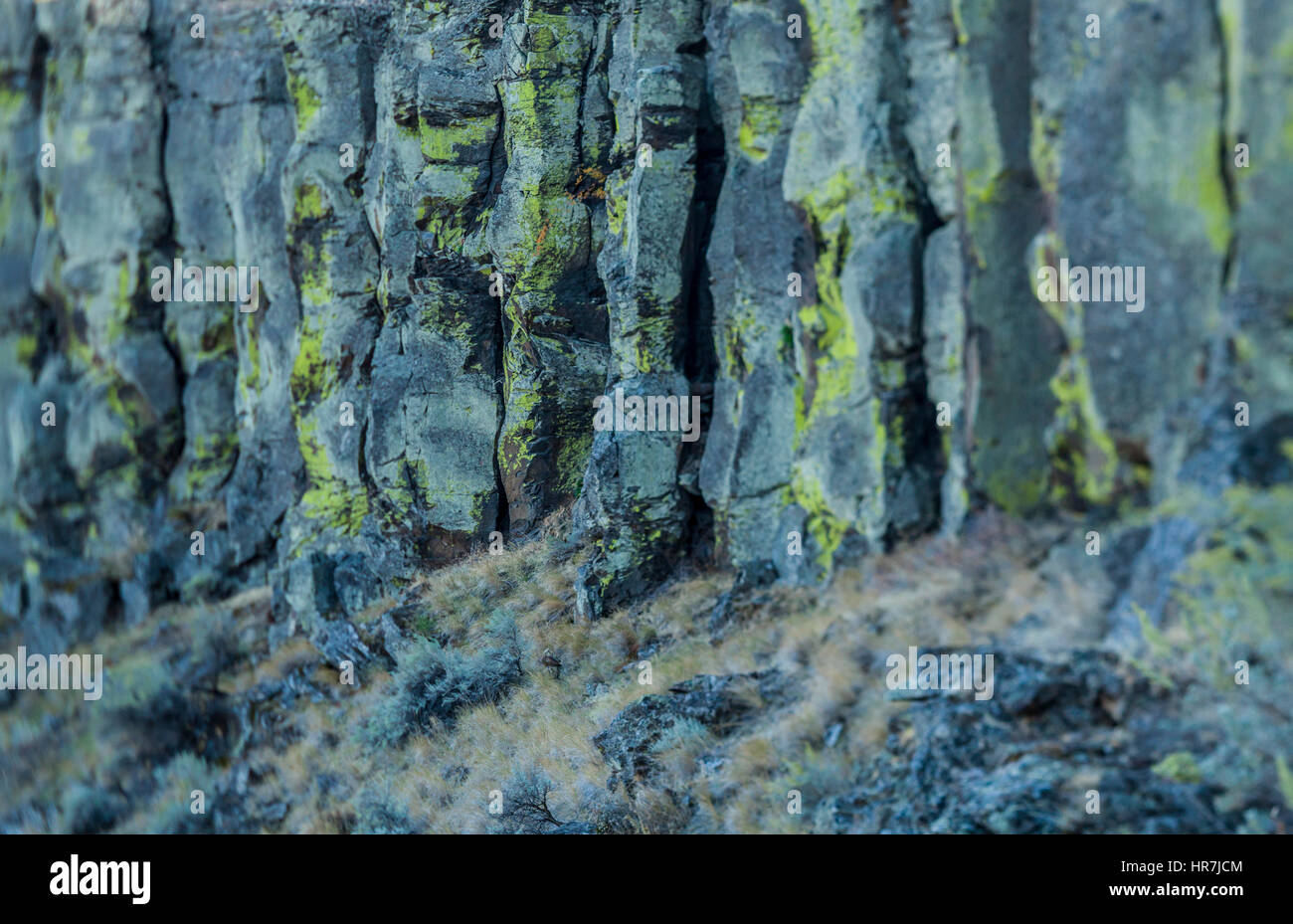 Il Lichen coperto scogliere di basalto in Eastern Washington, Frenchman's Coulee, Washington, Stati Uniti d'America. Immagini Stock