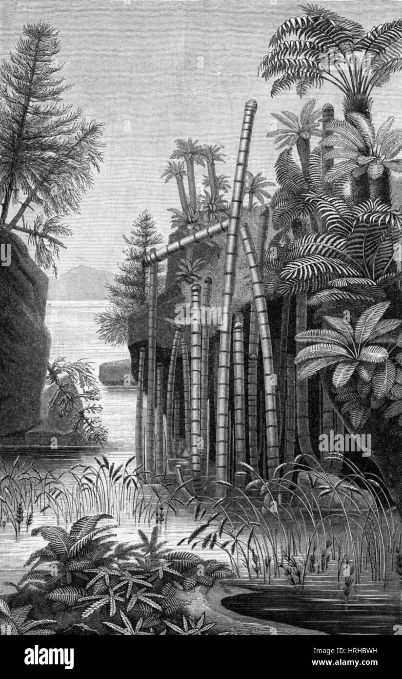 Le piante del periodo Triassico Immagini Stock