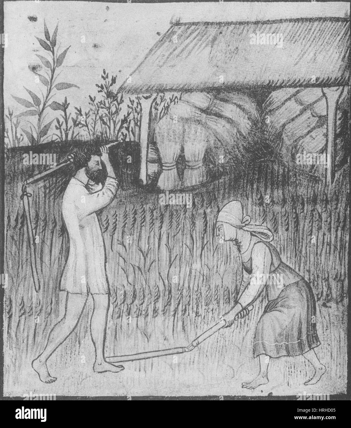 Agricoltura, allevamento medievale Immagini Stock