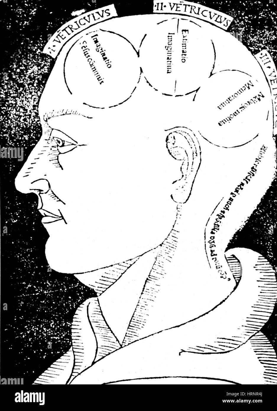 Le funzioni cerebrali, Albertus Magnus xilografia Immagini Stock
