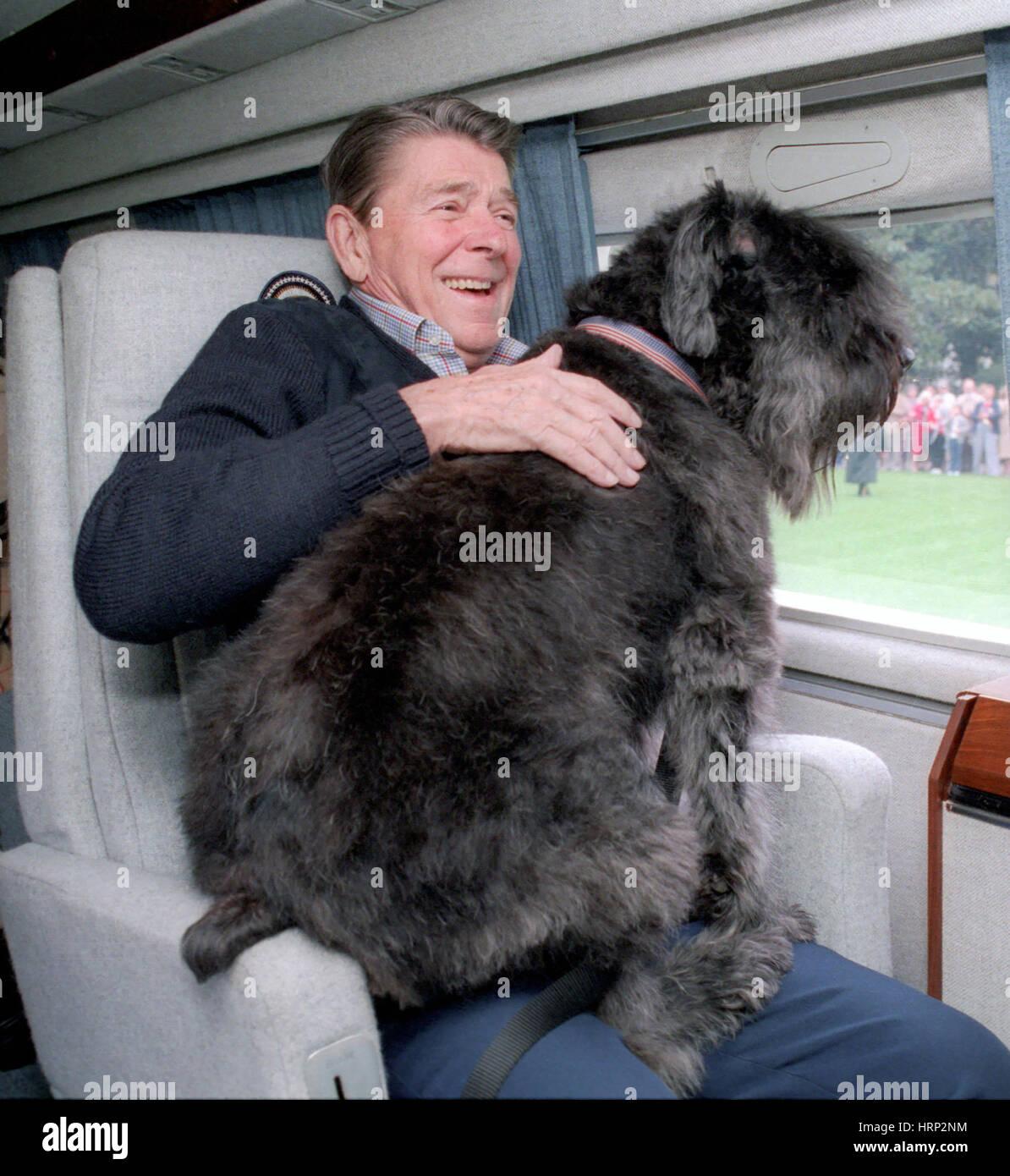Il presidente Reagan con Lucky, 1985 Immagini Stock