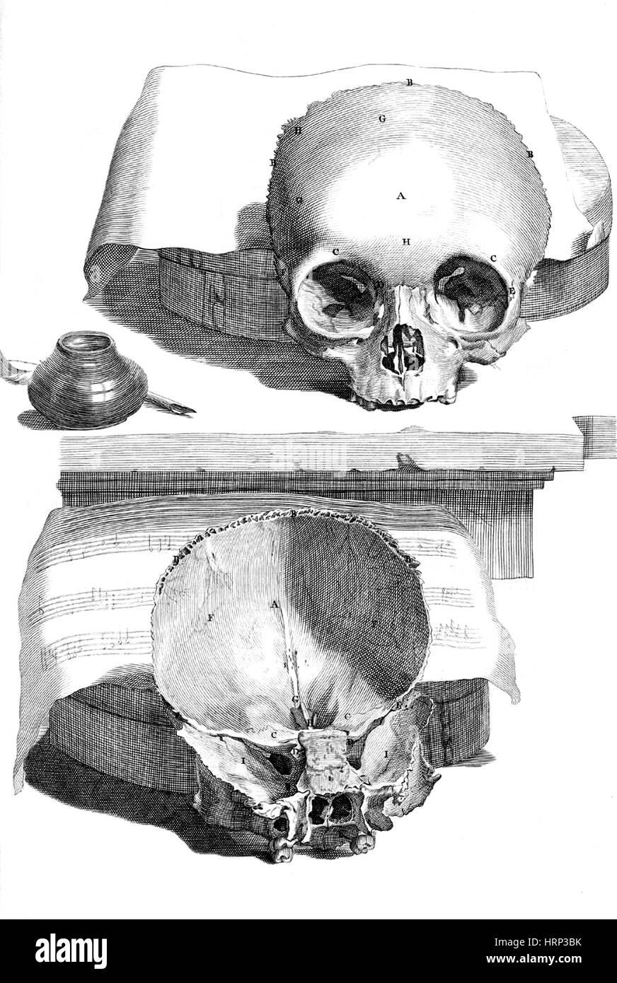 Anatomia humani corporis, tabella 89, 1690 Immagini Stock