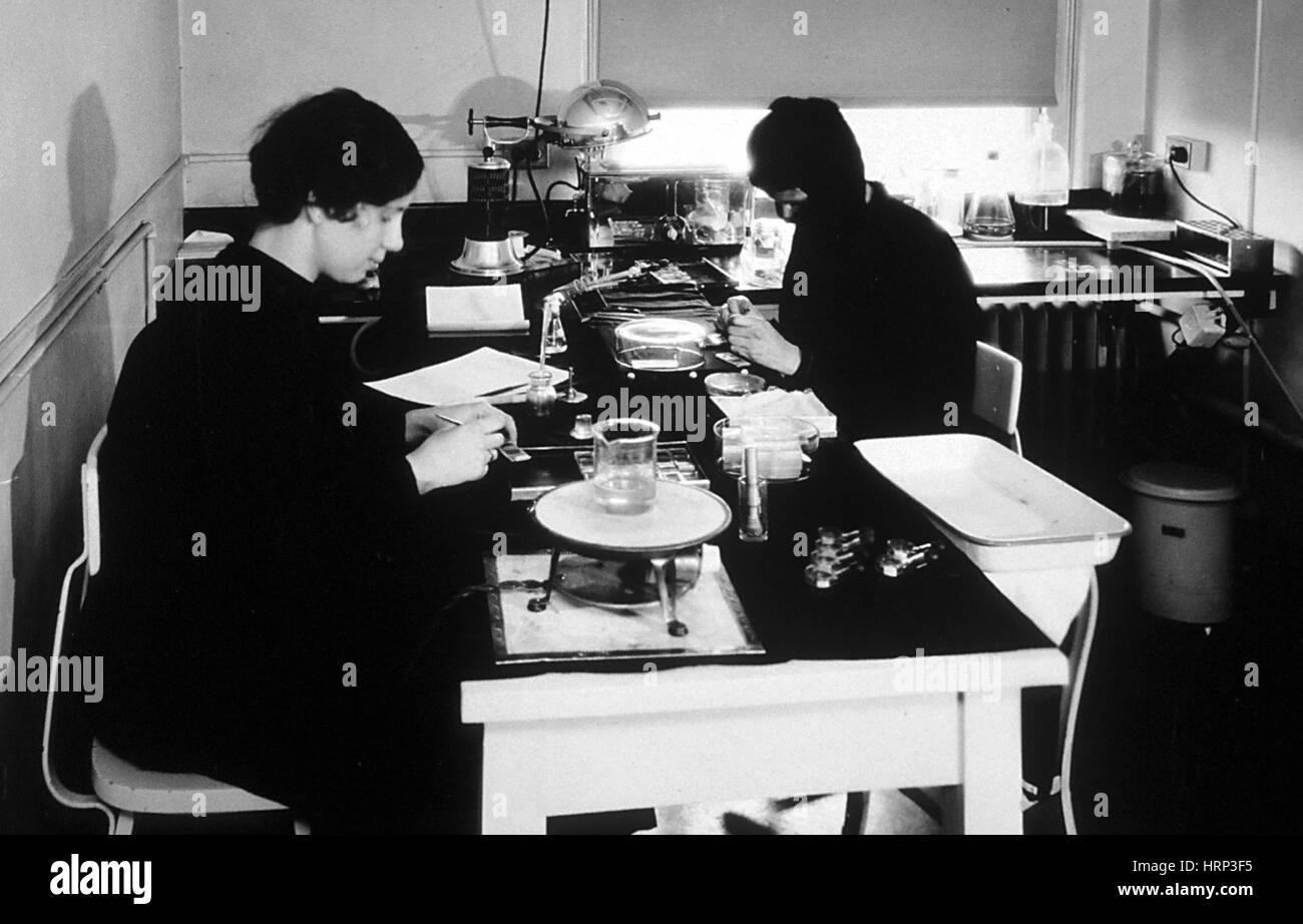La ricerca sul cancro, coltura di tessuti Reparto, 1931 Immagini Stock