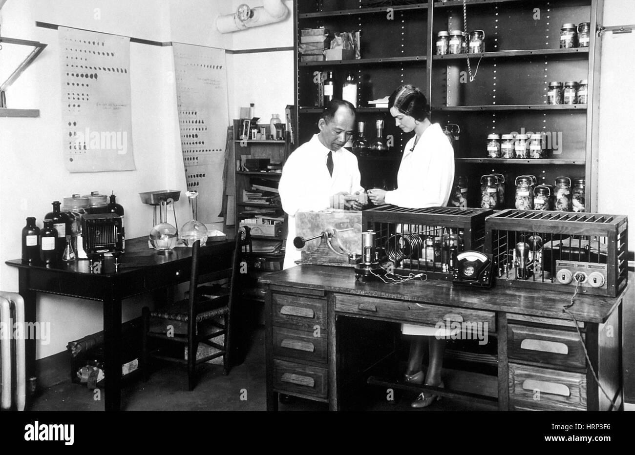 Tumori sperimentali dipartimento, 1931 Immagini Stock
