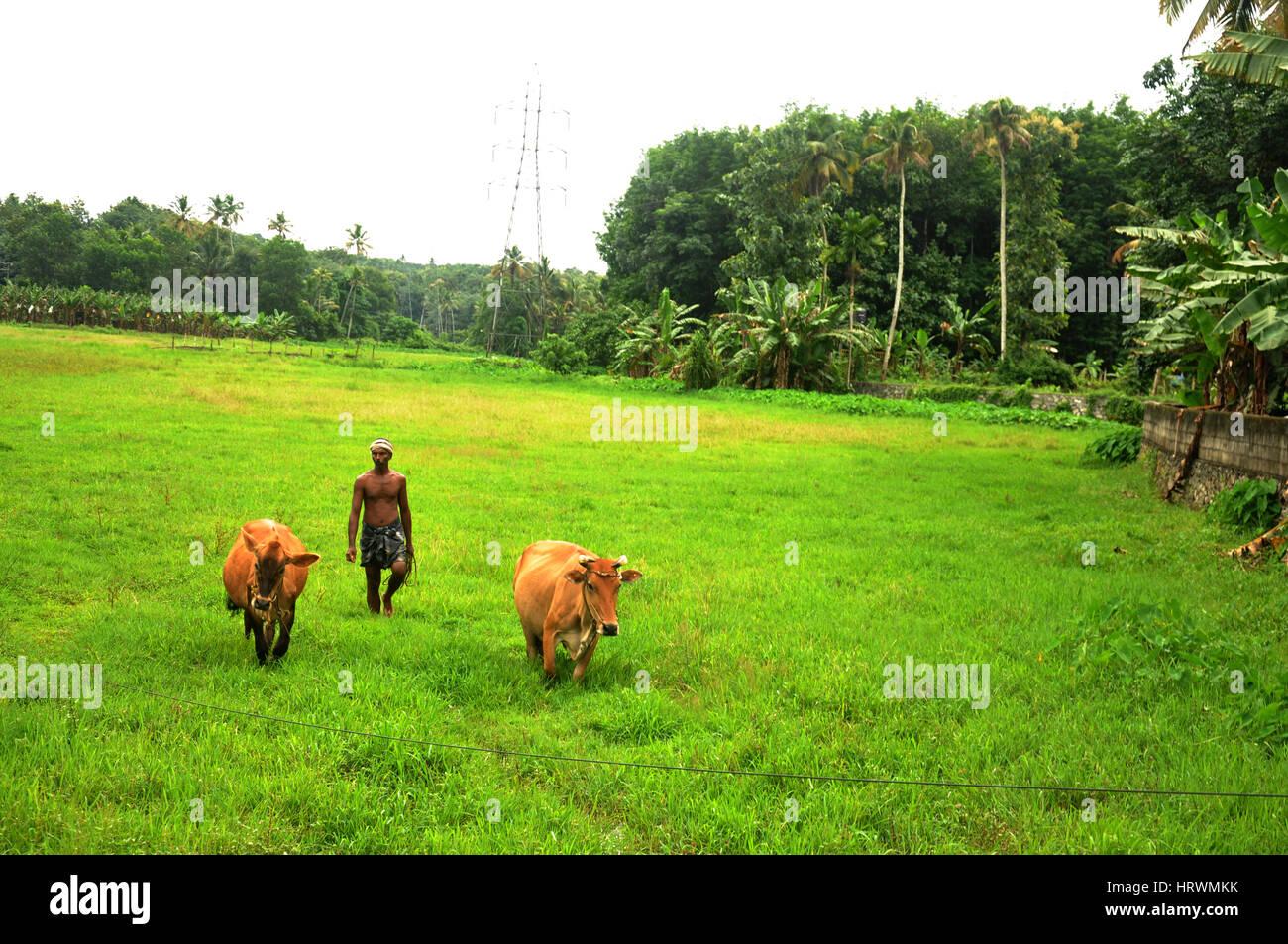 Villaggio visto, Kerala, India Immagini Stock
