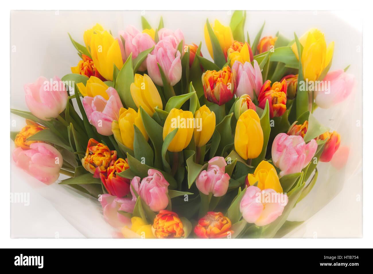 Fiori Tulipani Mazzi Di Fiori Colorati Di Tulipani Cocept Della