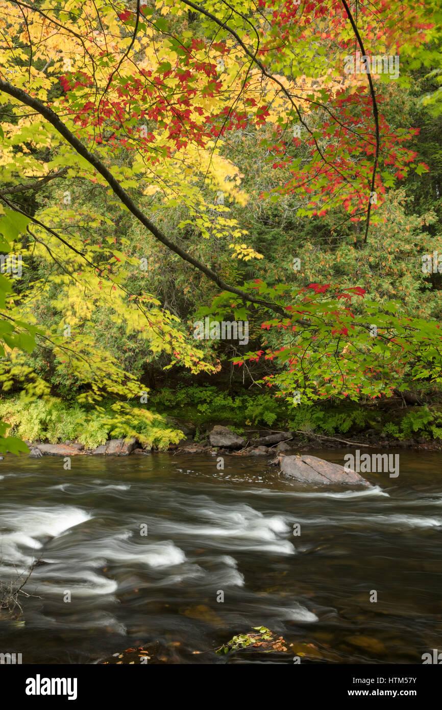 Colori dell'Autunno lungo il fiume Oxtongue a Ragged Falls Provincial Park, Ontario, Canada Foto Stock