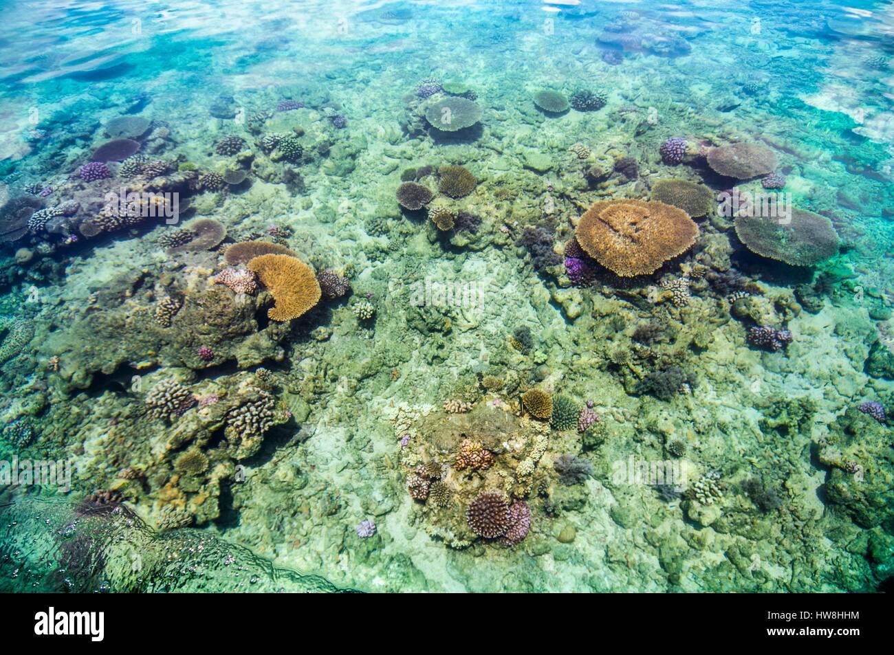 Risultati immagini per la barriera corallina di mayotte immagini?