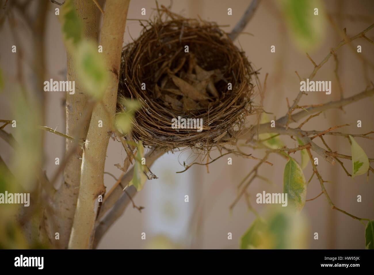 Vuoto Di Nidificazione Di Un Uccello Nido Vuoto Anche Una