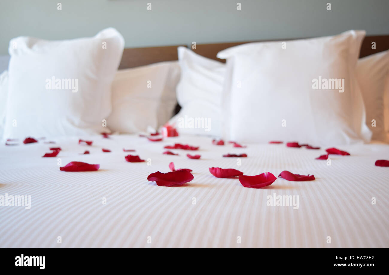 Il giorno di san valentino, bianco letto grande con i petali di rosa, rosso dei petali di rosa sul letto grande Immagini Stock
