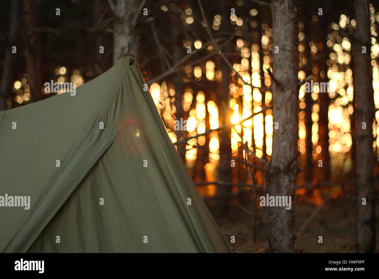 Campeggio in tenda al forrest Immagini Stock