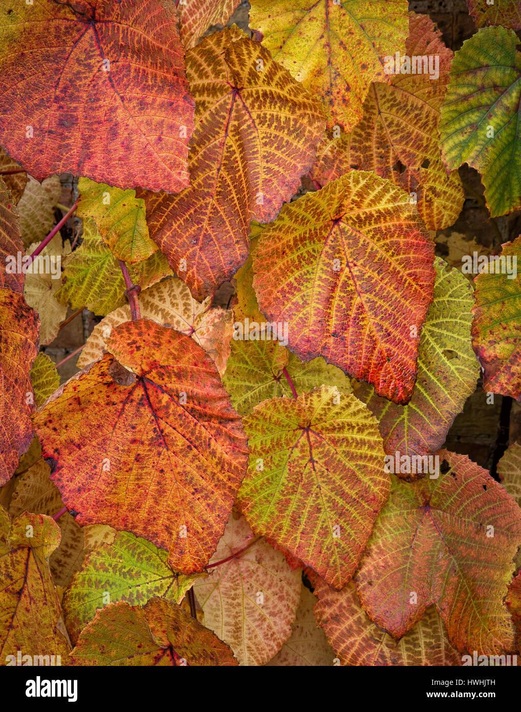 Foglia Di Bambu Remix.Budo Immagini Budo Fotos Stock Alamy