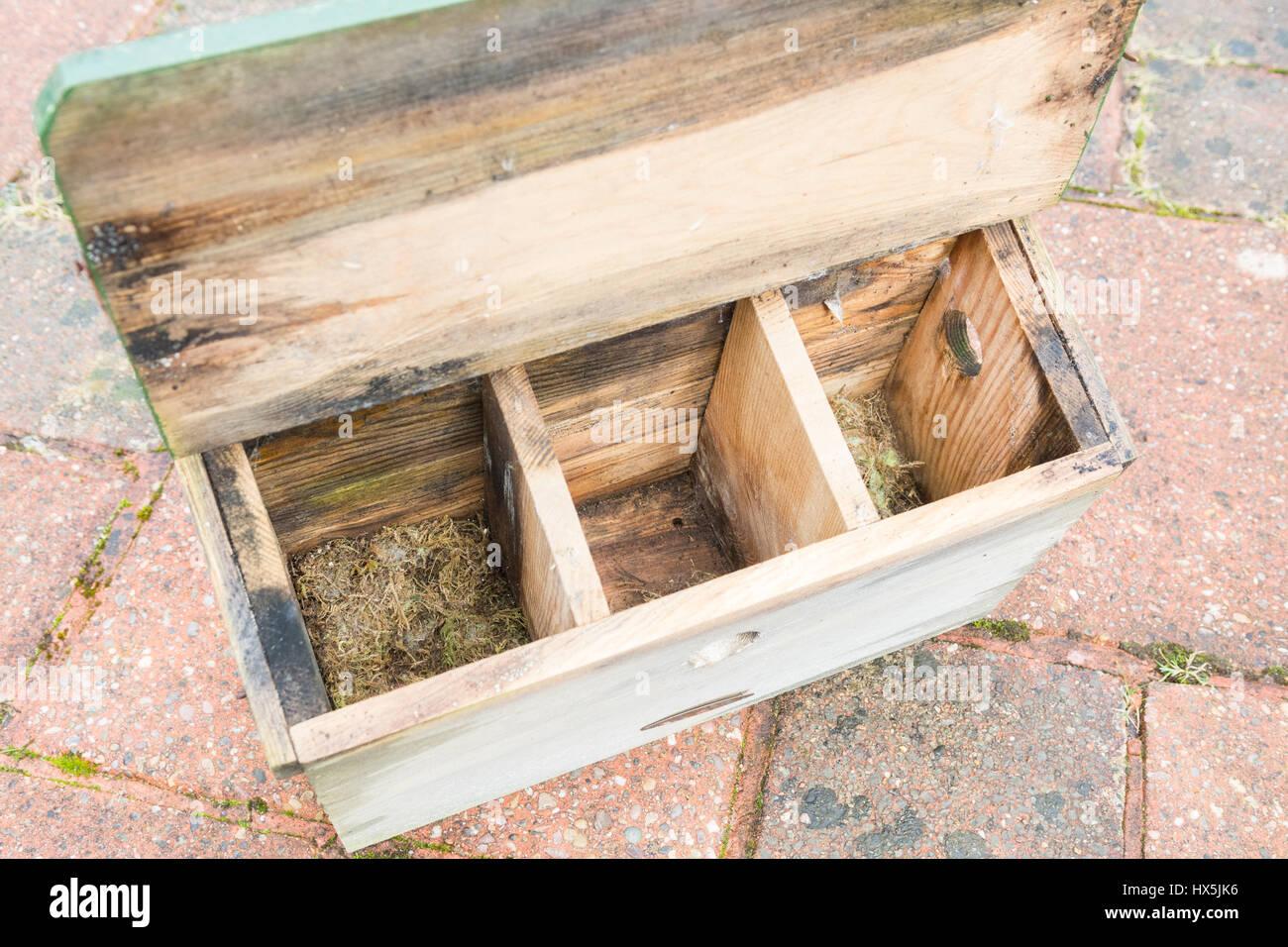 Casella di uccelli terrazza per la passeri pronti per la pulizia fuori il vecchio materiale di nesting Immagini Stock