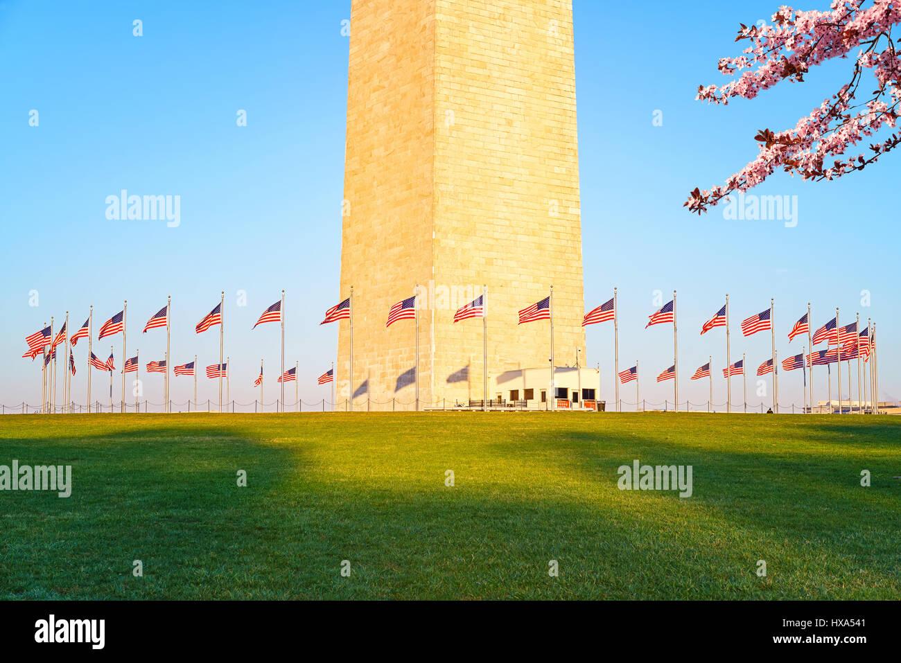 Fiore di Ciliegio vicino al Monumento di Washington, Stati Uniti d'America Foto Stock