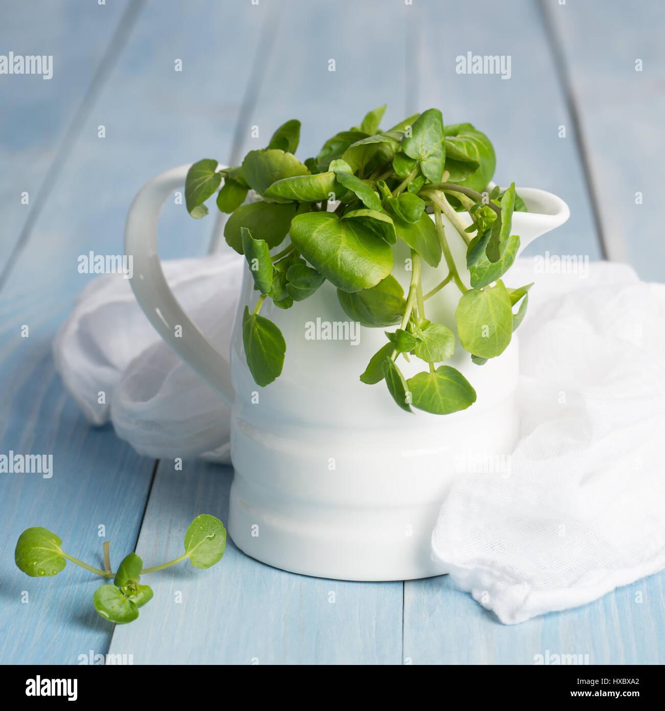 Crescione fresco in una brocca con il bianco MUSSOLA Tessuto Foto Stock