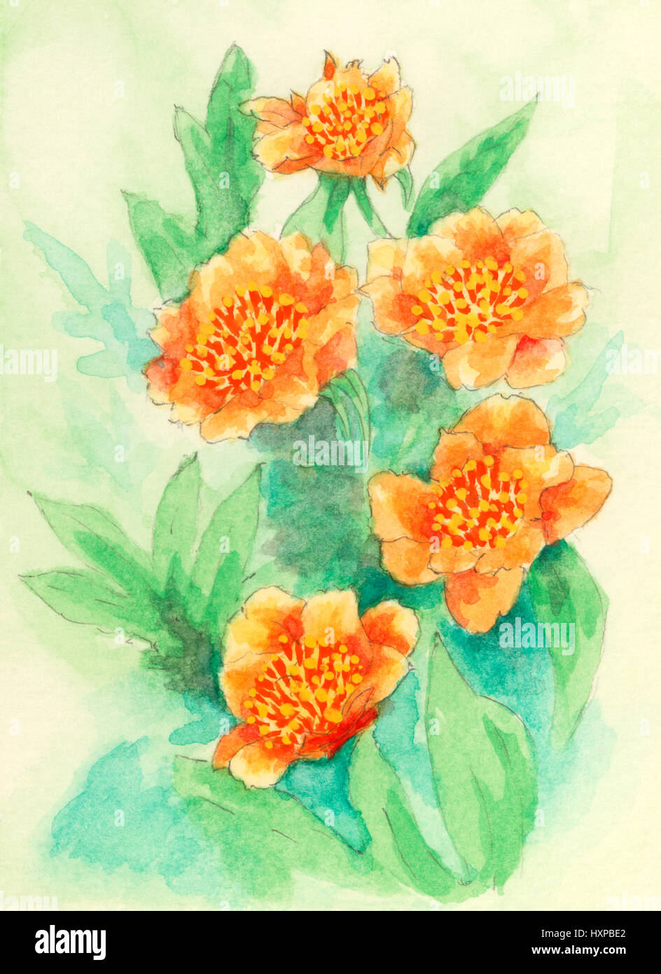 Peonia (Paeonia) fiori. Gouache dipinto su carta. Immagini Stock