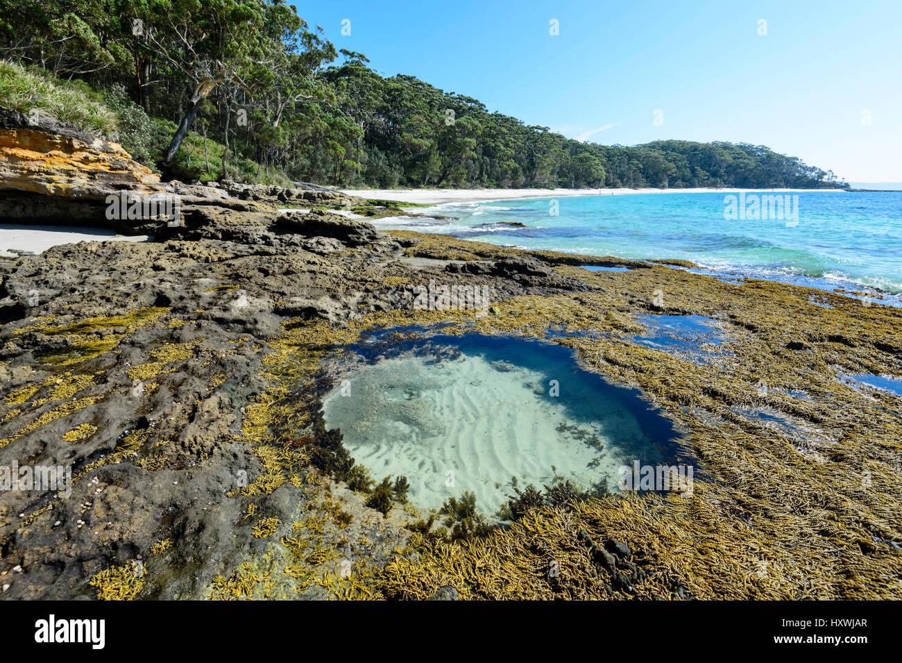 Circolare del pool di roccia e alghe a Murray's Beach, Booderee National Park, Jervis Bay, Nuovo Galles del Immagini Stock