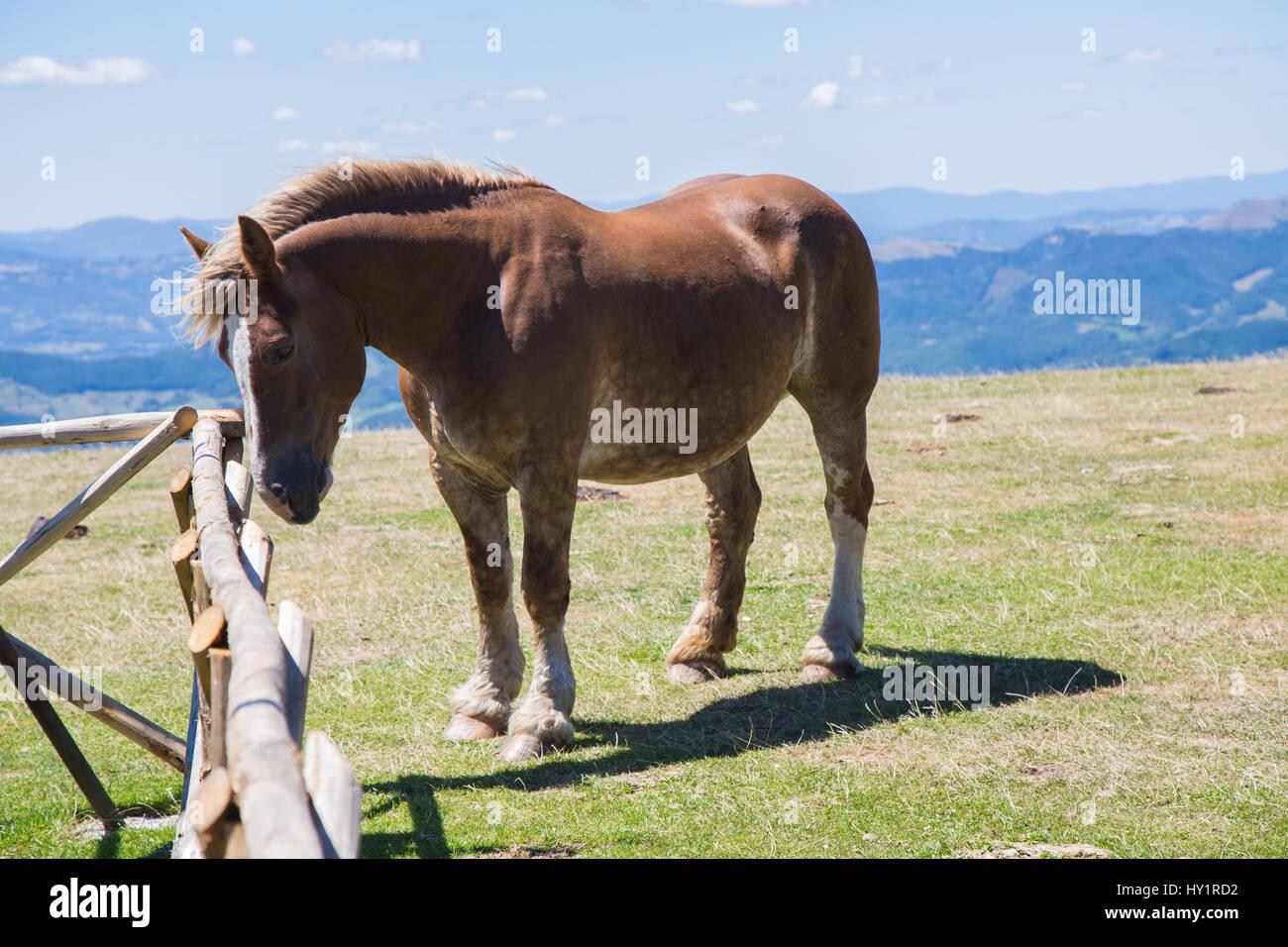 Lonely cavallo al pascolo in montagna Immagini Stock