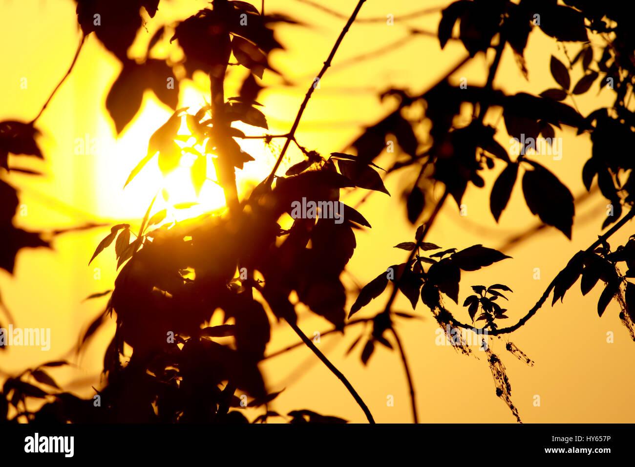 La luce del sole attraverso i rami e foglie. Immagini Stock