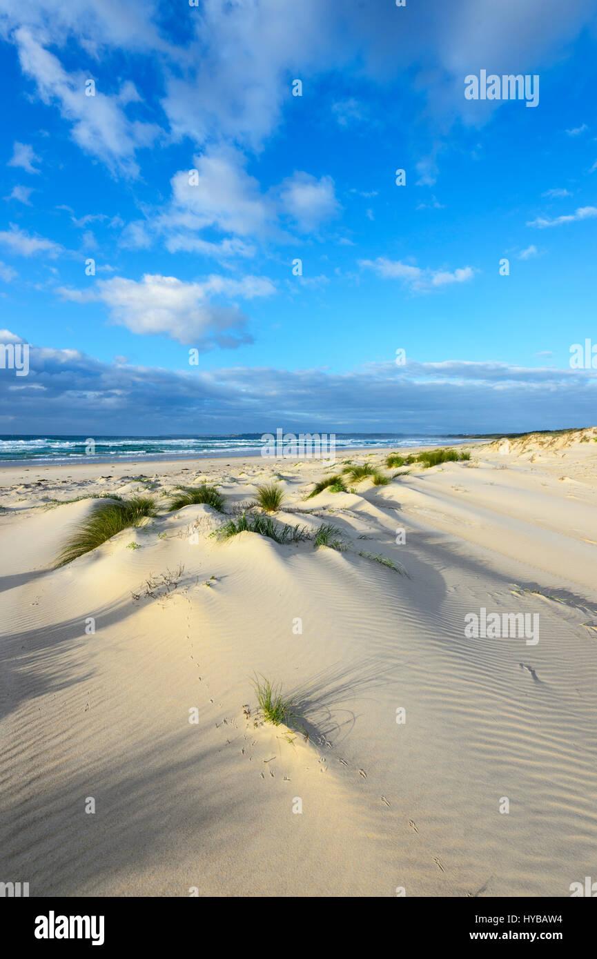 Pittoresche dune di sabbia e ciuffi di erba a Conjola Beach, Shoalhaven, South Coast, Nuovo Galles del Sud, NSW, Australia Foto Stock