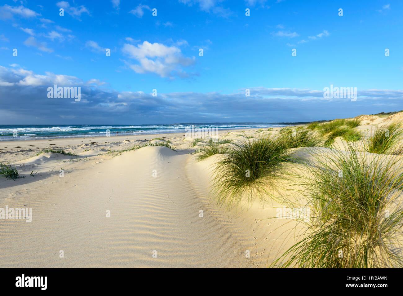 Pittoresche dune di sabbia e ciuffi di erba a Conjola Beach, Shoalhaven, South Coast, Nuovo Galles del Sud, NSW, Foto Stock